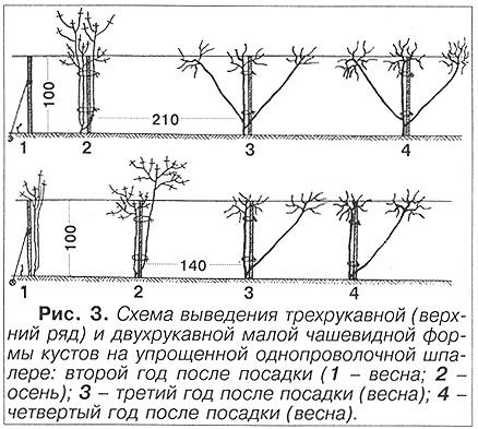 Рекомендуемая схема посадки