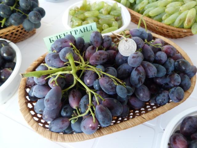 Ранние сорта винограда для Ростовской области — виноградные регионы России