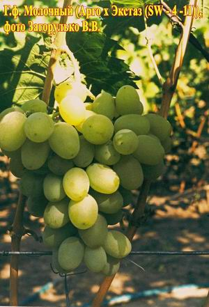 Бисероплетение виноград схема - Делаем фенечки своими руками.